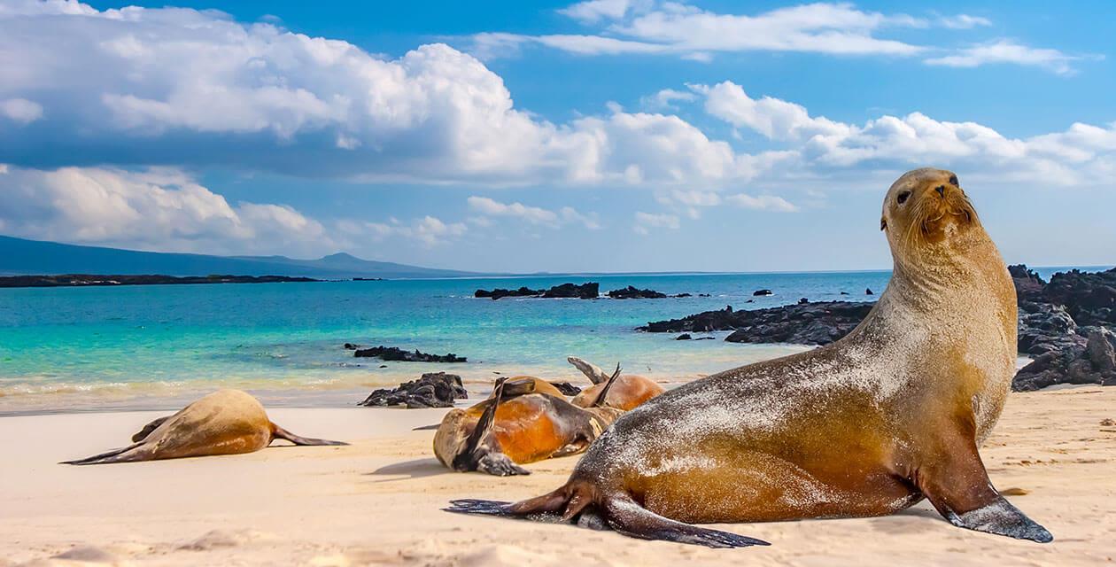 Galapagos Island Seals