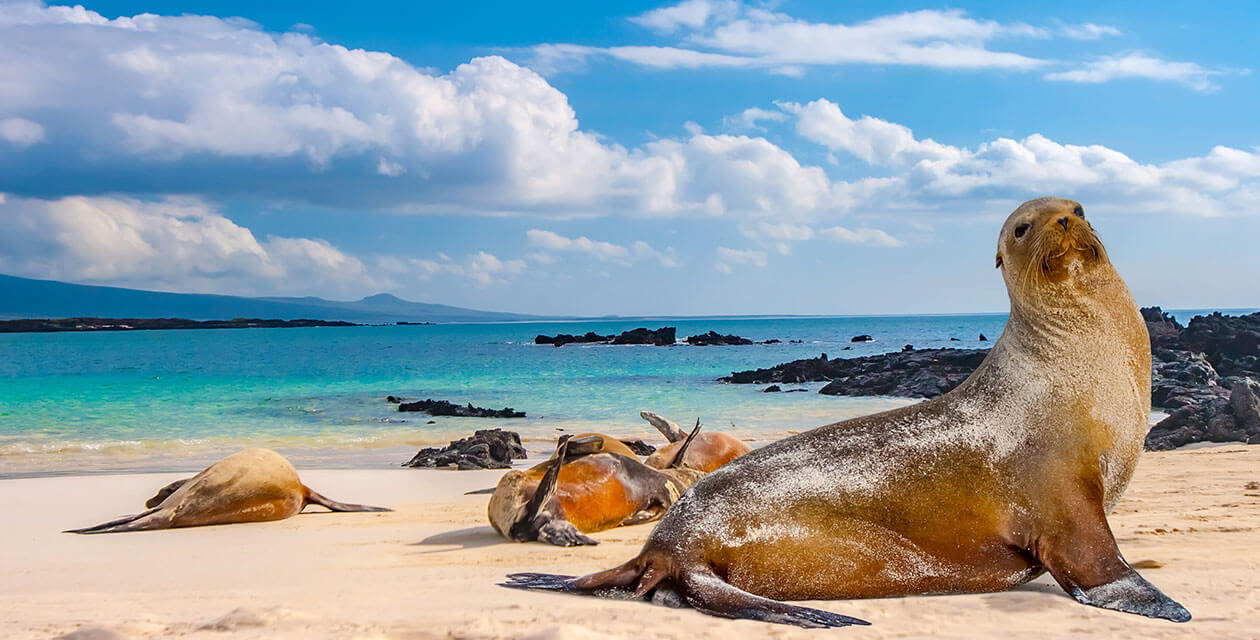 wildlife relaxing on the white sand beaches of the galapagos islands