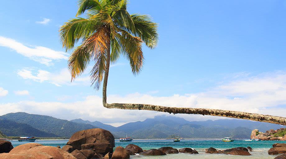 Fallen palm tree in Ilha Grande