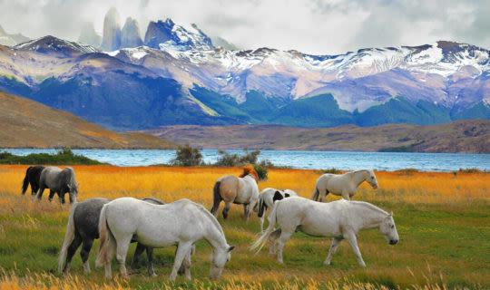 horses grazing in torres del paine