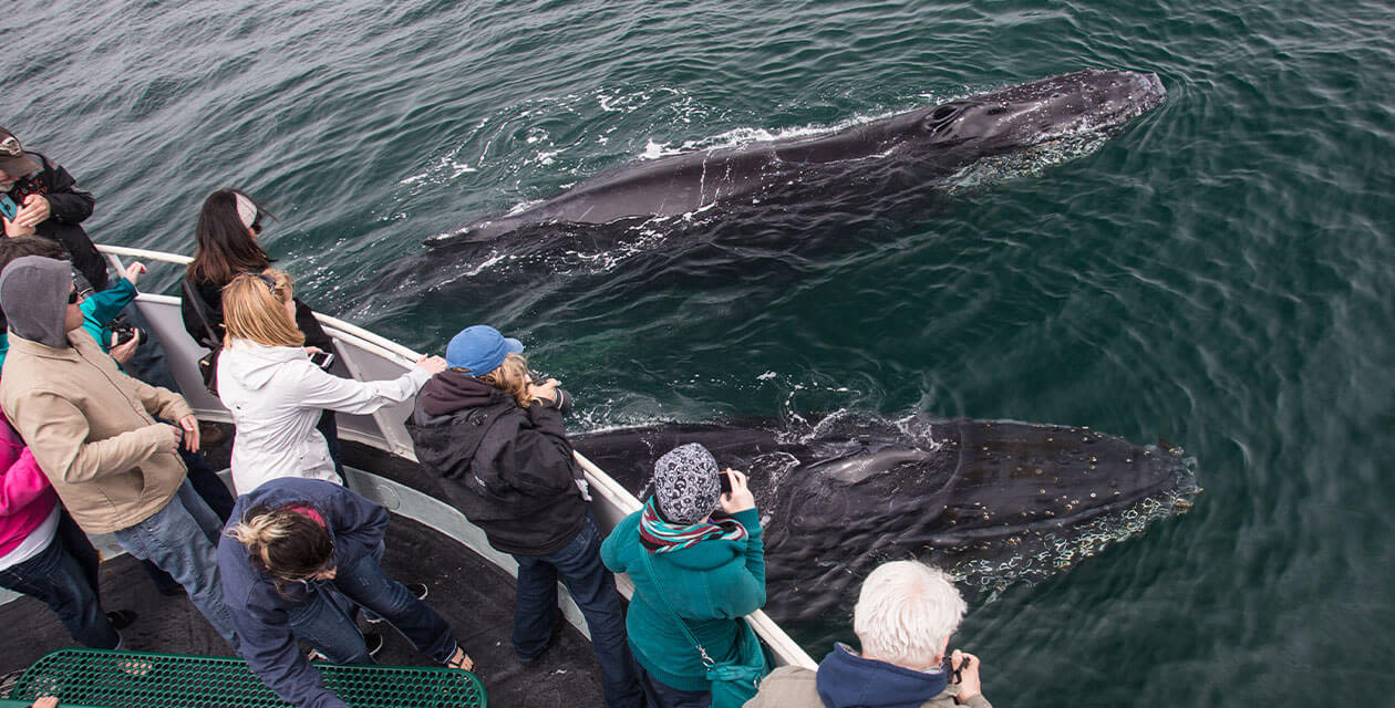 tourists on boat spotting whales below