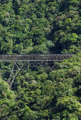 atlantic rainforest in brazil