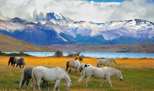 Torres Del Paine view with wild horses in the field