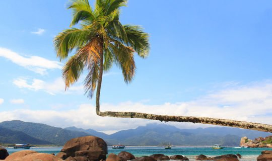 gorgeous beach and palm tree in buzios brazil